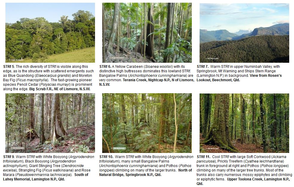 Examples of subtropical rainforest